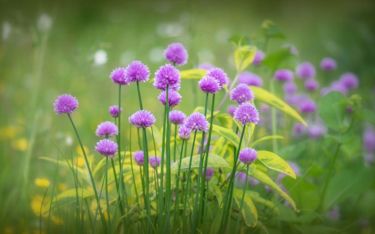 Фото бесплатно цветы, фиолетовые, стебли - на рабочий стол