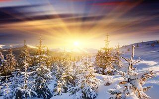 Бесплатные фото восход,солнца,лучи,свет,зима,горы,елки