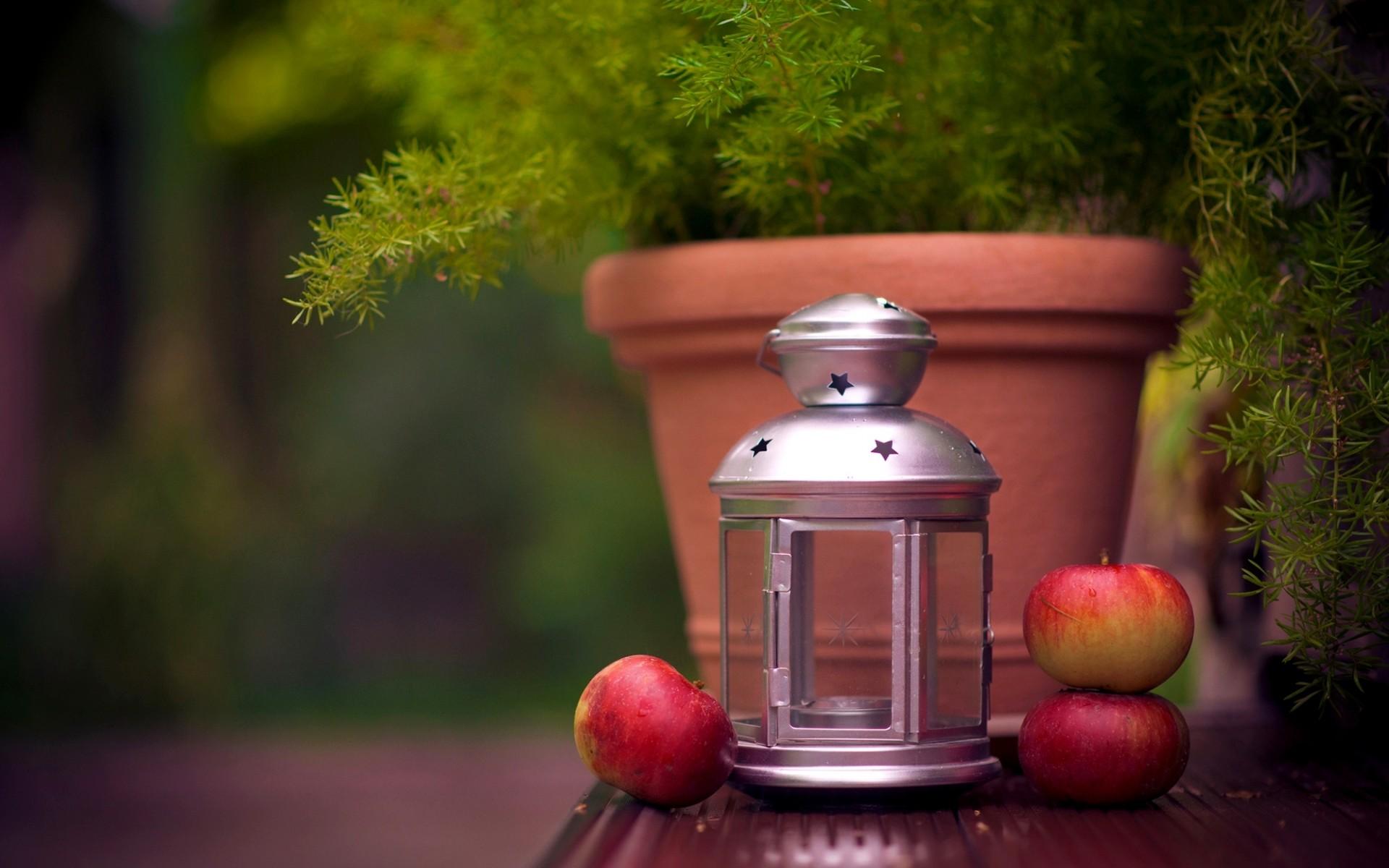 яблоки, горшок, растение