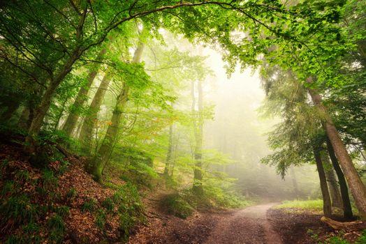 Photo free landscape, forest, sun