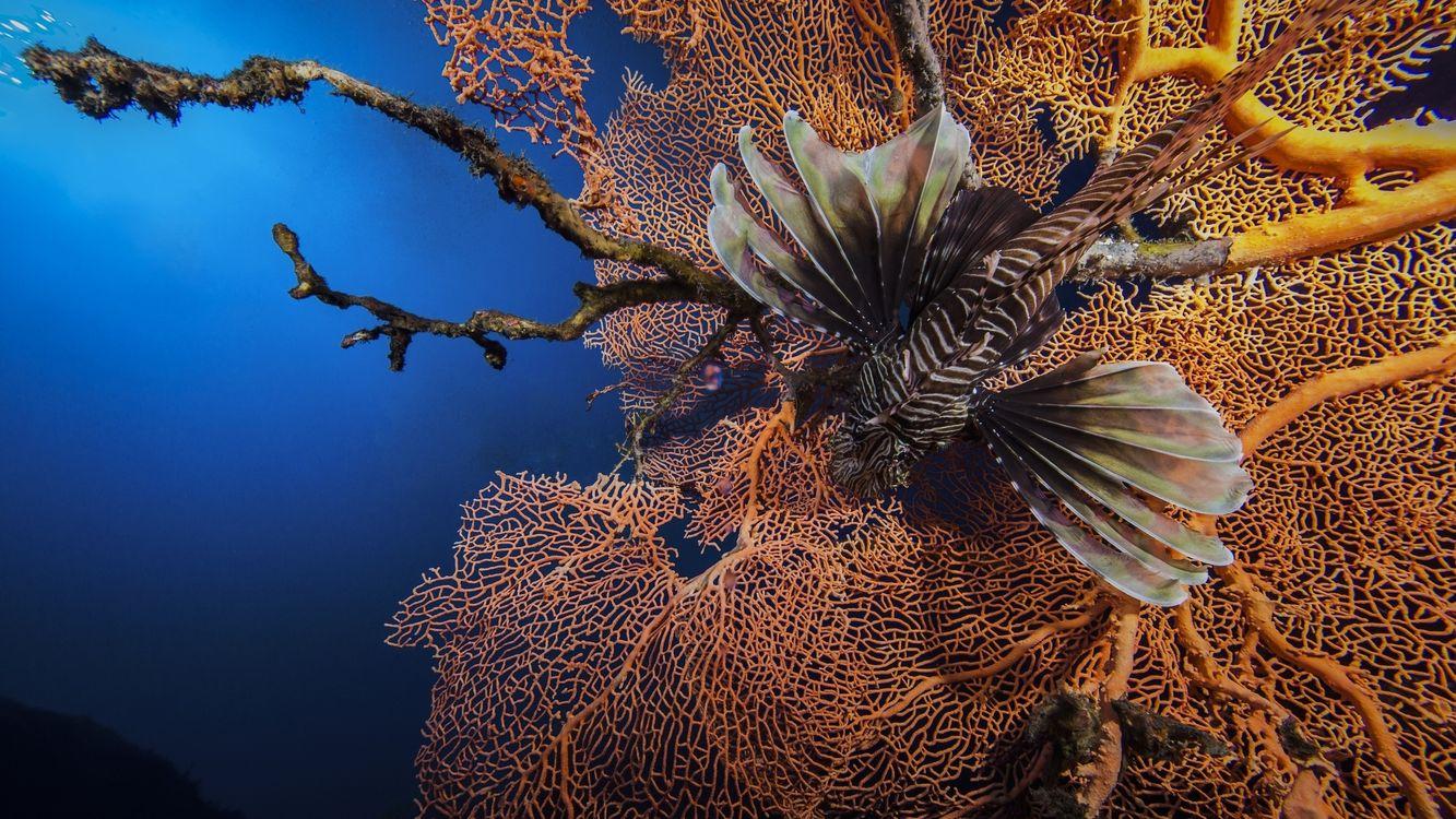 Фото бесплатно рыба, плавники, окрас, полосы, кораллы, вода, подводный мир