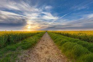Бесплатные фото закат,поле,цветы,пейзаж