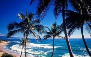 Бесплатные фото тропики,берег,пальмы,море,волны,горизонт,небо
