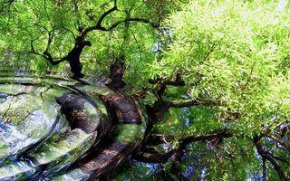 Бесплатные фото вода,круги,волны,отражение,деревья,листва