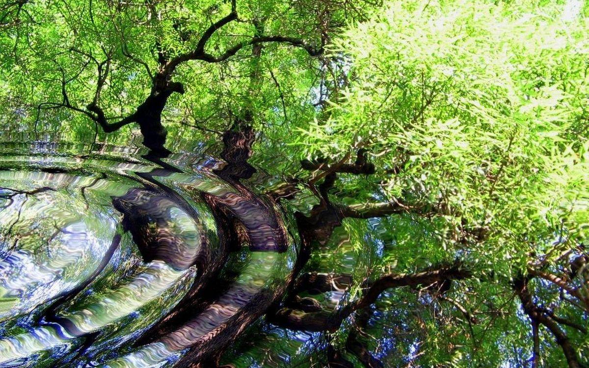 Фото бесплатно вода, круги, волны, отражение, деревья, листва, природа
