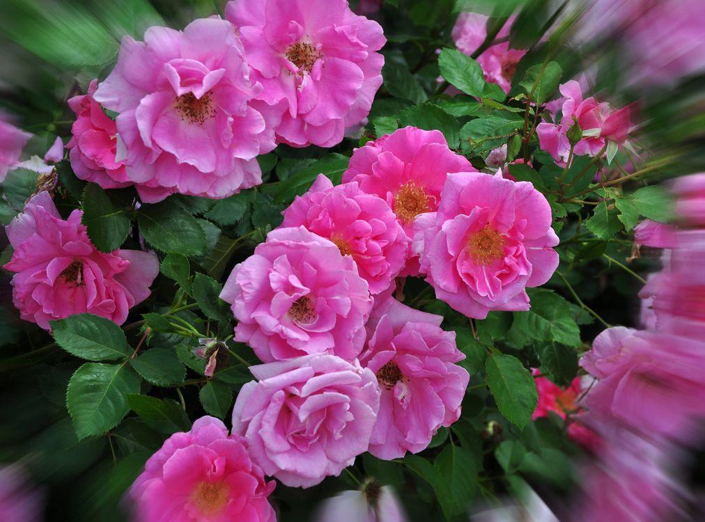 Фото бесплатно цветок, цветы, флора - на рабочий стол