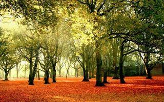 Фото бесплатно лучи солнца, ветви, парк