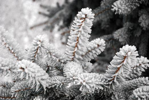Бесплатные фото ветви елки,снег,зима