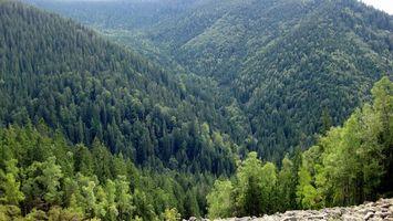 Бесплатные фото лето,горы,камни,ущелье,растительность,деревья
