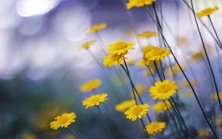 Бесплатные фото цветочки,лепестки,тычинки,желтые,стебли