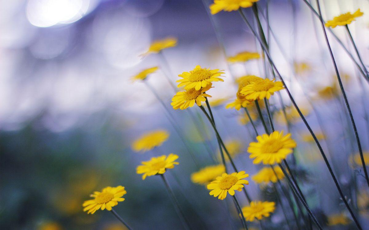 Фото бесплатно цветочки, лепестки, тычинки, желтые, стебли, цветы