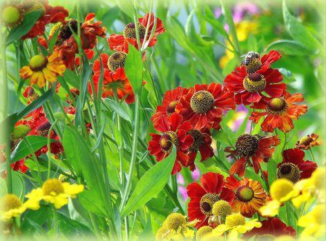 Фото бесплатно поле, цветы, флора