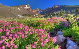 Бесплатные фото долина,цветы,трава,камни,горы,снег,небо