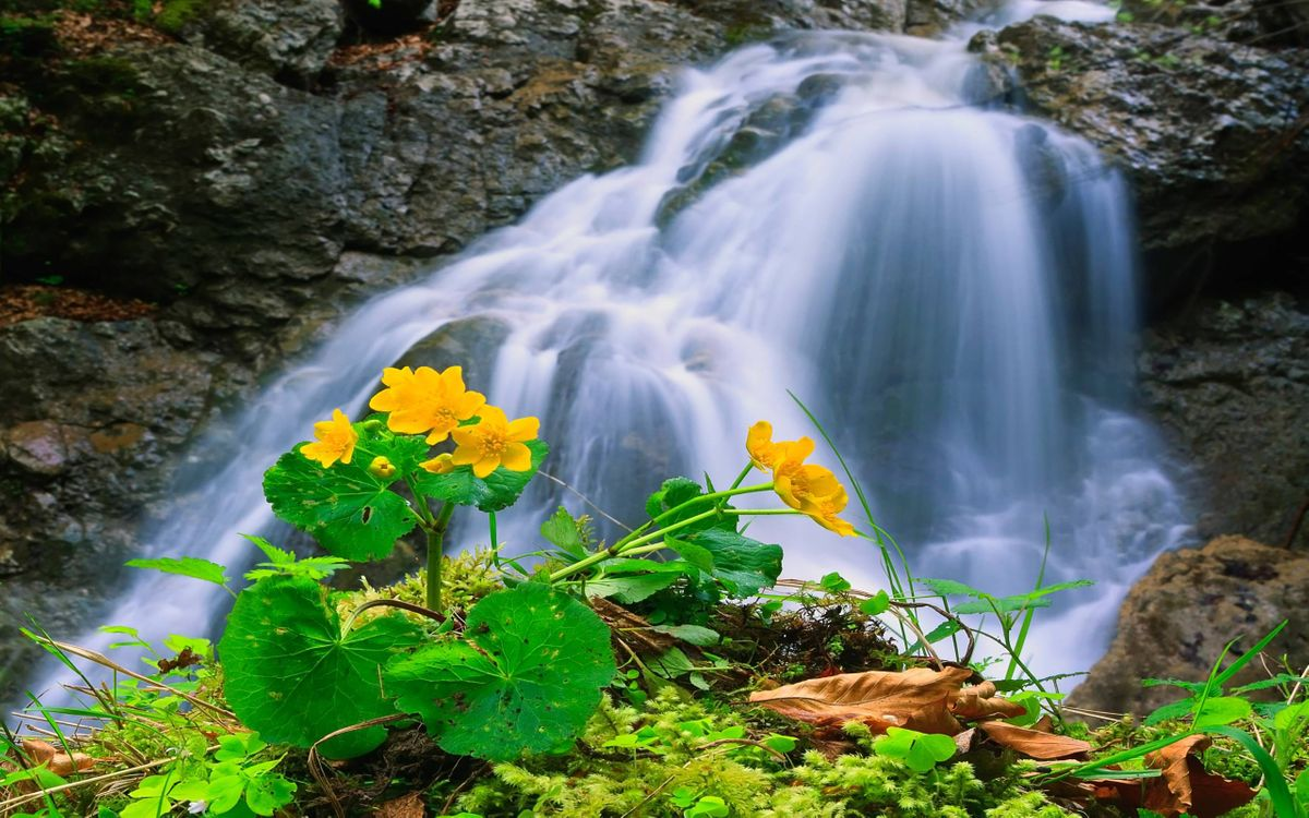 Фото бесплатно ручей, водопадик, цветок, природа