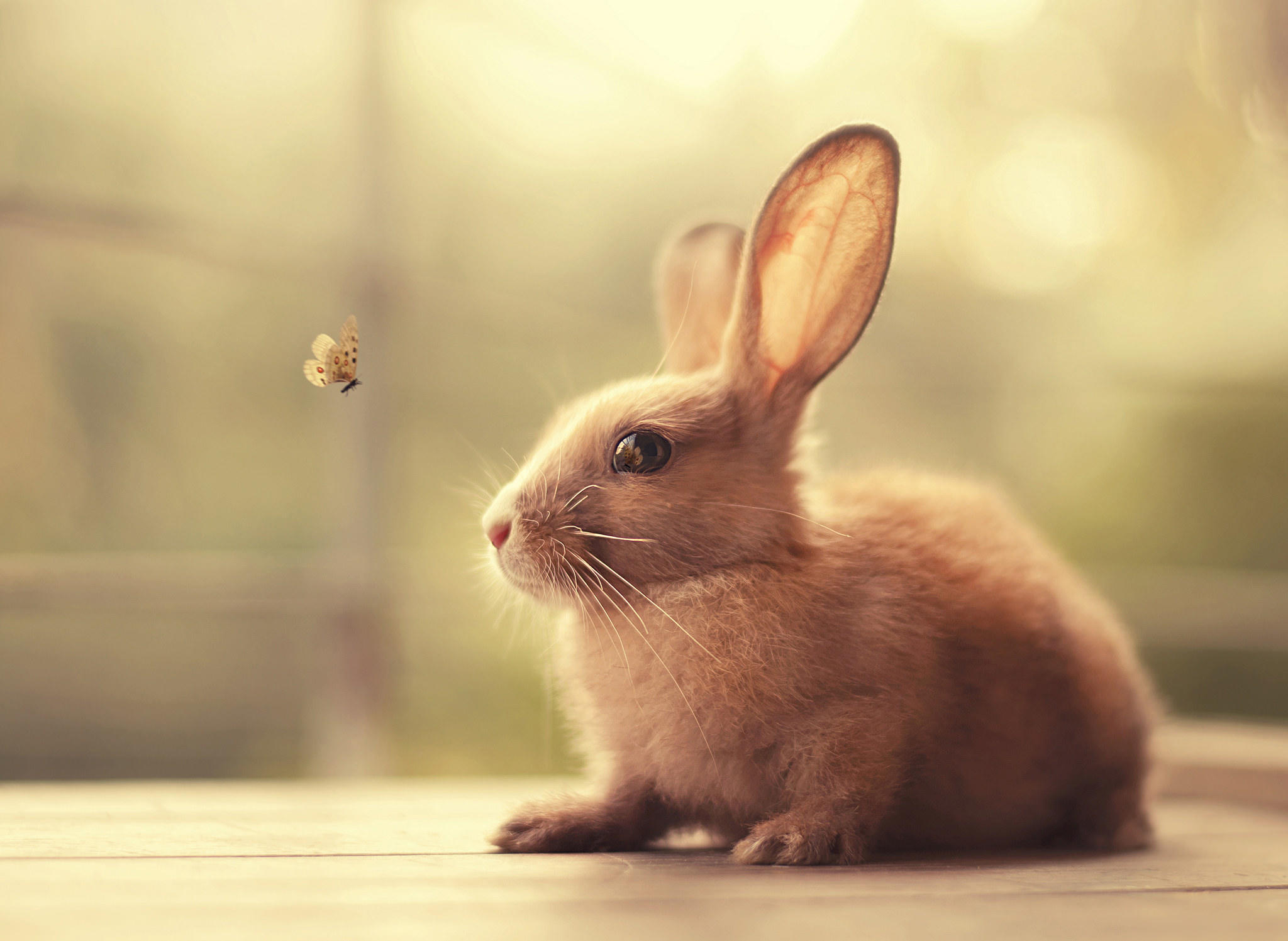 Обои кролик, бабочка, животное