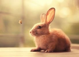 Фото бесплатно кролик, бабочка, животное