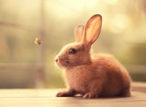 Photo free rabbit, butterfly, animal