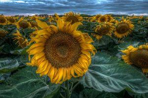 Фото бесплатно пейзаж, флора, закат