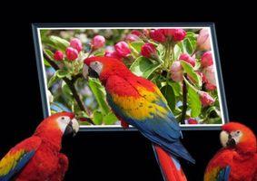 Фото бесплатно Попугаи, животны, птицы