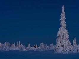 Бесплатные фото зима,снег,сугробы,деревья,домик,пейзаж