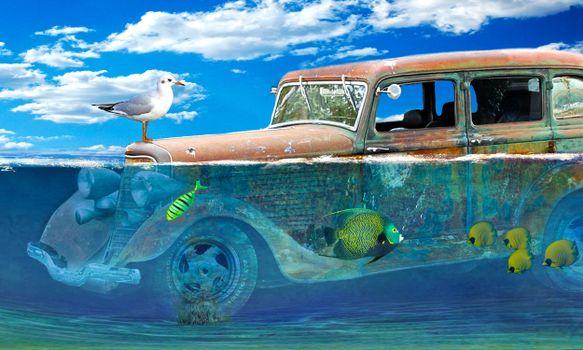 Заставки затопленный автомобиль, рыбы, чайка