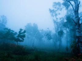 Бесплатные фото лес, деревья, туман, природа