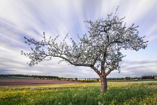 Бесплатные фото поле,дерево,цветение,пейзаж