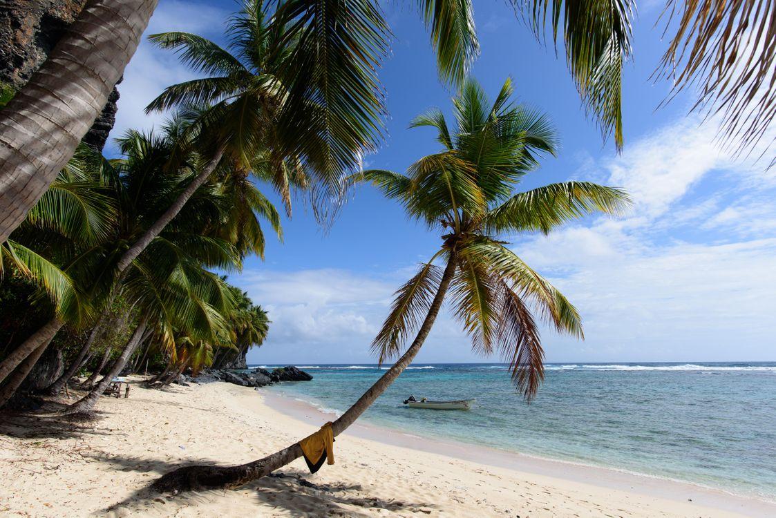 Фото бесплатно остров, море, океан, берег, пляж, пальмы, пейзаж, Samana Dominican Republic, пейзажи