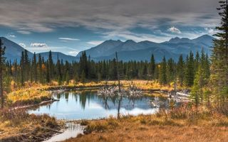 Фото бесплатно озеро, коряги, трава, лес, тайга, деревья, горы, небо, облака