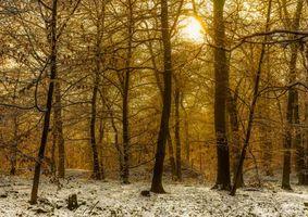 Фото бесплатно лес, деревья, закат
