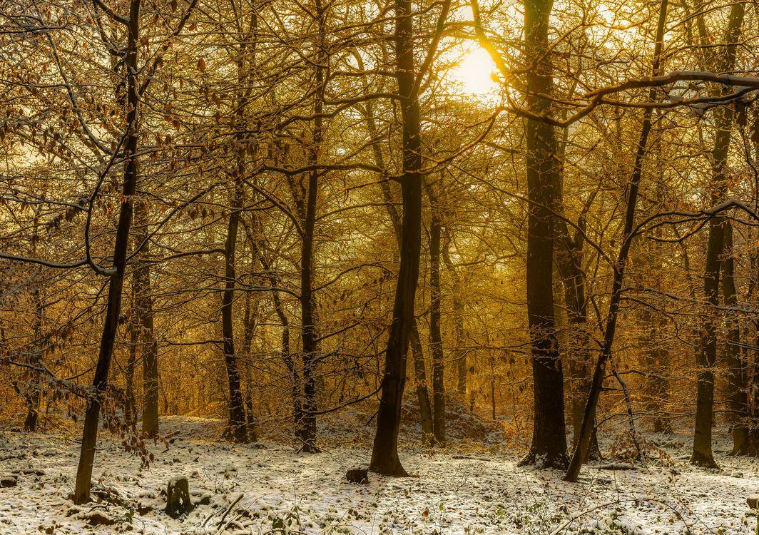 Фото бесплатно лес, деревья, закат, пейзаж, природа