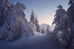 Бесплатные фото зима,закат,снег,сугробы,деревья,пейзаж
