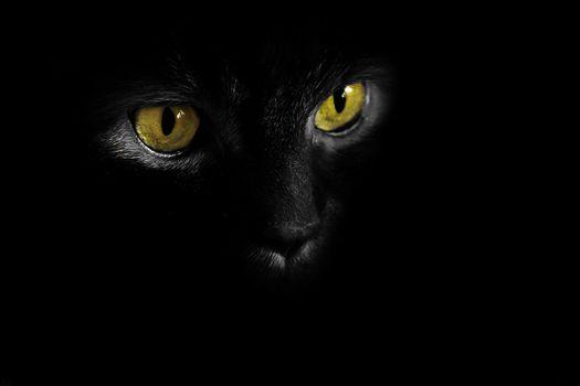 Бесплатные фото ночь,морда,кошка,кот,глаза,темнота,чёрный фон