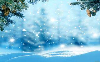 Обои снег, сугробы, снежинки, ветки ели, шишки