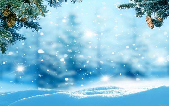 Бесплатные фото снег,сугробы,снежинки,ветки ели,шишки