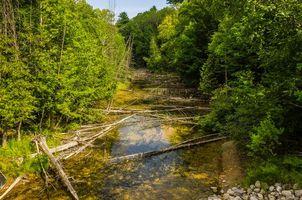 Фото бесплатно Platte River, Michigan, река