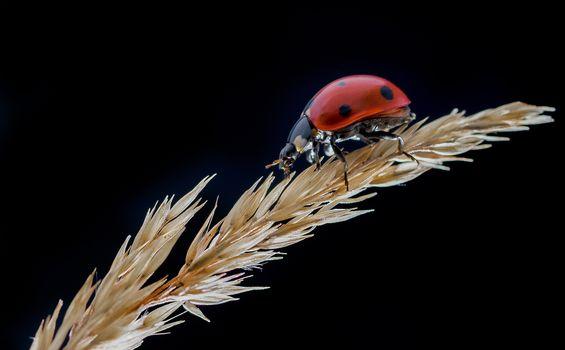 View photo blade of grass, ladybug free
