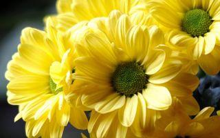 Бесплатные фото цветочки, лепестки, желтые, тычинки, зеленые