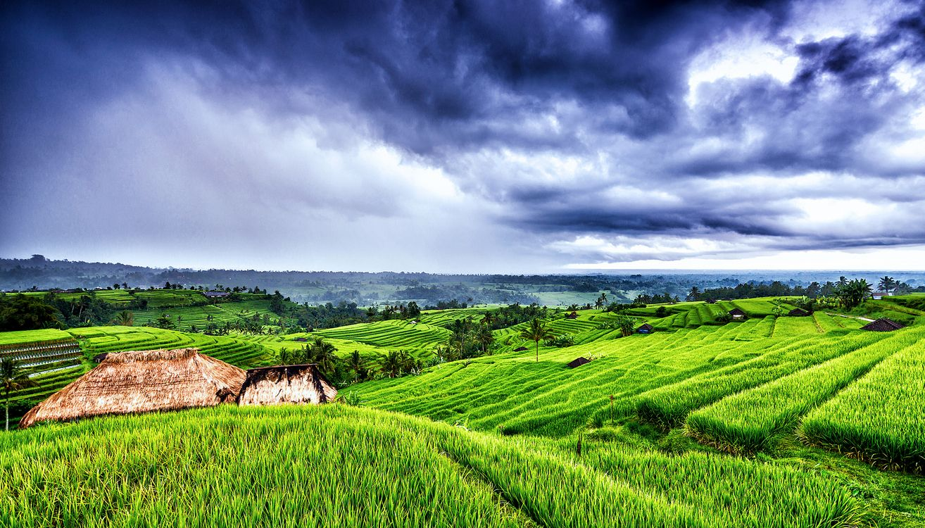Фото бесплатно Бали, Индонезия, поля - на рабочий стол