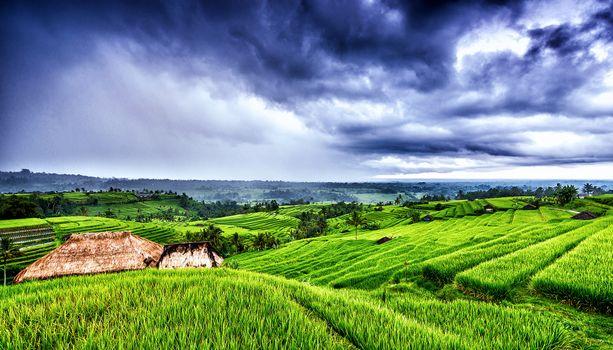 Заставки Бали, Индонезия, поля