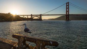 Бесплатные фото Golden Gate,Калифорния,Сан-Франциско,мост,Золотые Ворота,закат,пейзаж