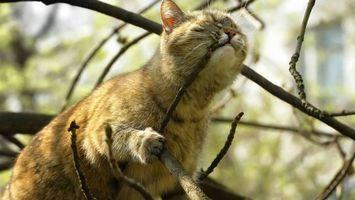 Бесплатные фото кот и веточки