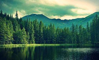 Бесплатные фото берег,озеро,лес,елки,гора