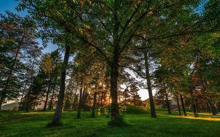 Бесплатные фото лес,деревья,трава,воздух
