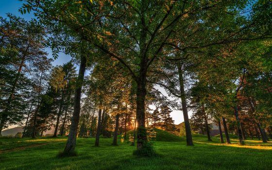 Фото бесплатно воздух, трава, деревья