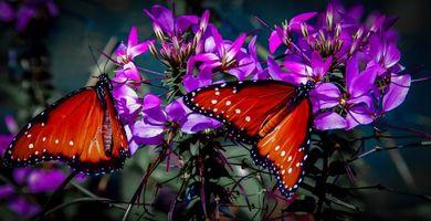 Бесплатные фото цветы,бабочки,макро