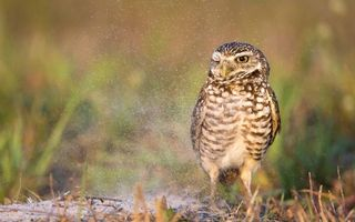 Бесплатные фото сова на земле,травка