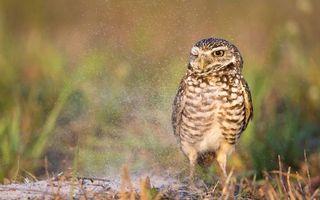 Фото бесплатно сова на земле, травка