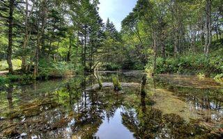 Бесплатные фото лес,заводь,деревья