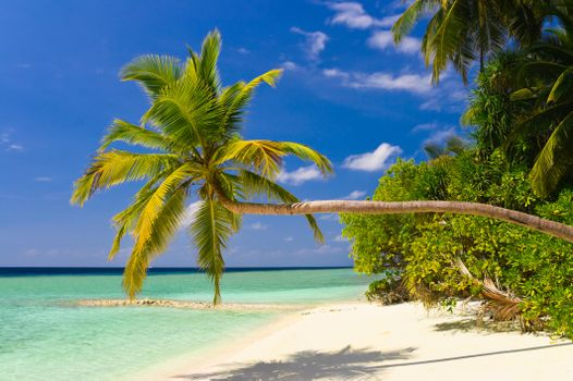 Заставки на тему пальмы, море